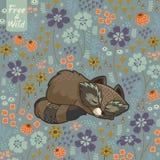 Rolig liten tvättbjörn som sover i en äng Royaltyfria Bilder