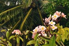 ROLIG Ö, MALDIVERNA: Exotiska blommor och palmträd Royaltyfri Foto