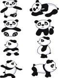 rolig panda för samling Arkivbild