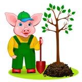 Rolig piggy trädgårdsmästare som på våren planterar ett träd stock illustrationer