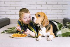 Rolig pojke- och hundbeagle som äter chiper royaltyfri fotografi