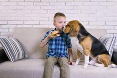 Rolig pojke- och hundbeagle som äter en hamburgare arkivfoton