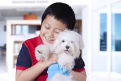 Rolig pojke och maltese hund hemma Royaltyfria Foton