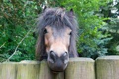 Rolig ponny Royaltyfri Fotografi