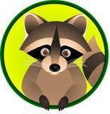 rolig raccoon för tecknad film Arkivfoto
