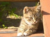 Rolig randig kattunge Royaltyfri Fotografi