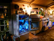 Rolig ritt för Dino världsfamilj inomhus till och med smutsigt kök fotografering för bildbyråer