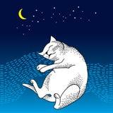Rolig sova katt Serie av komiska katter Royaltyfri Foto