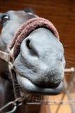 Rolig stående för häst arkivbilder
