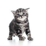 Rolig svart kattkattunge på white Royaltyfri Bild