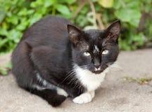 Rolig svartvit katt Arkivbilder