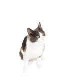 Rolig svartvit katt Arkivfoton