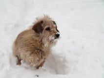 rolig taxhund Royaltyfri Fotografi