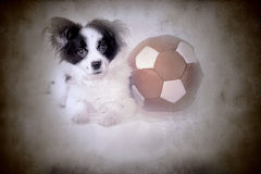 Rolig valp och gammal fotbollbal Royaltyfria Bilder
