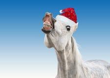 Rolig vit häst med jultomtenhatten royaltyfri fotografi