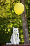 Rolig vit katt som rymmer en gul ballong Arkivfoto
