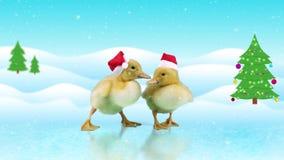 Roliga ankungar i röda Santa Claus hattar som glider på isen arkivfilmer