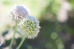 Roliga blommor Royaltyfri Foto