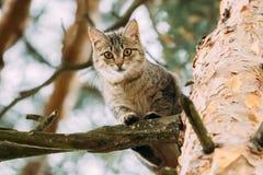 Roliga Cat Sitting On en sörjaträdfilial i sommar Forest Park Arkivbilder