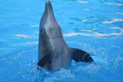 Roliga delfin Fotografering för Bildbyråer