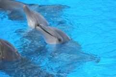 Roliga delfin Arkivbild