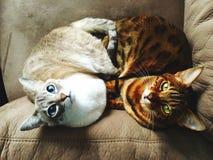 roliga djur Arkivfoto