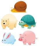 roliga djur Arkivbilder