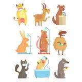 Roliga djur som tar en dusch och en tvagning, uppsättning för etikettdesign Detaljerade illustrationer för hygien och för omsorgt royaltyfri illustrationer