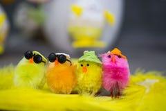 Roliga fågelungar för östligt Royaltyfria Foton