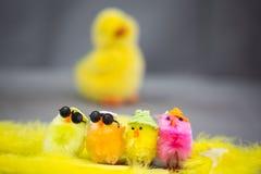Roliga fågelungar på östligt Royaltyfri Fotografi