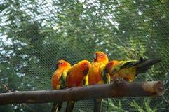 roliga fåglar royaltyfri foto