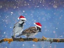 roliga fåglar som sitter på en filial i vinter i det insnöat Arkivfoto