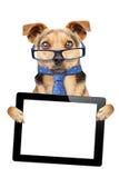 Roliga hundexponeringsglas binder den isolerade tomma skärmen för minnestavlan Arkivfoton