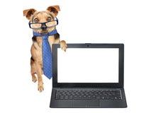 Roliga hundexponeringsglas binder uppvisning av den isolerade bärbara datorn för den tomma skärmen Arkivbilder