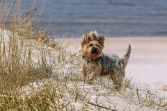 Roliga hundtakter Royaltyfria Bilder
