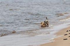 Roliga hundtakter Arkivfoton