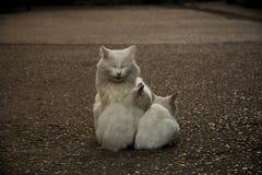 roliga isolerade objekt för djur familj för tecknad filmkatttecken Royaltyfri Foto