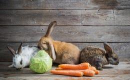 Roliga kaniner med grönsaker Royaltyfri Bild