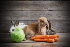 Roliga kaniner med grönsaker Royaltyfri Fotografi