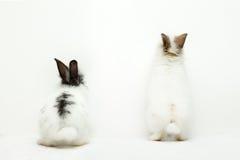 roliga kaniner två Fotografering för Bildbyråer