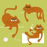 roliga katter Arkivbilder
