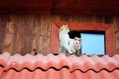 roliga katter royaltyfria bilder