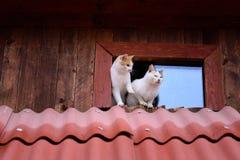 roliga katter arkivfoto