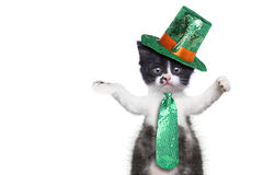 Roliga Kitten Celebrating den amerikanska feriehelgonPatricks dagen Arkivfoton