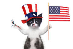 Roliga Kitten Celebrating den amerikanska ferien 4th Juli Royaltyfria Bilder