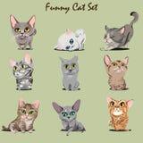 Roliga Kitty Set Arkivbilder