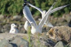 Roliga Seagulls Royaltyfri Foto