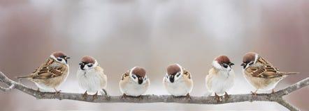 Roliga små fåglar sitter på en filial i en vår Sunny Park och kvitter royaltyfri fotografi