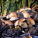 Roliga svampar Arkivfoto