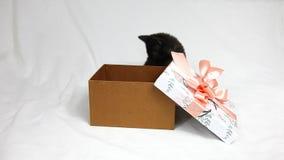 Roliga svarta kattungelekar med den rosa pilbågen på asken av gåvorna lager videofilmer